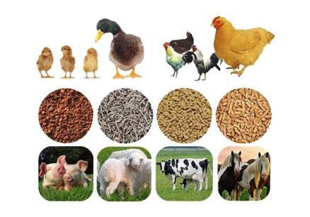 宠物食品FDA认证_动物饲料出口美国食品注册